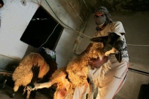 Palestinan Smugling goat through tunnel by AP on IMEC