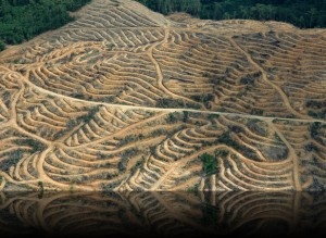 Palm Oil Plantation via Onelonetree