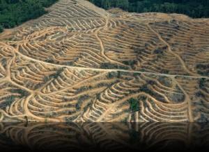 Palm Oil Plantation via Onelonetree