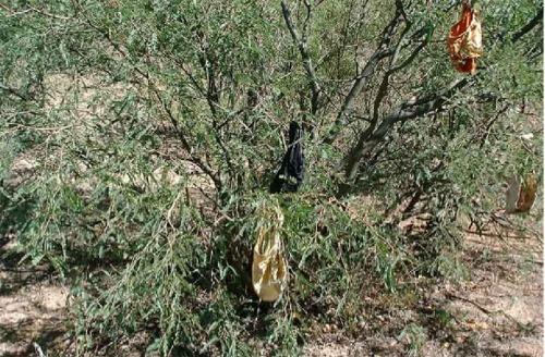 Rape Tree via Documentary Border