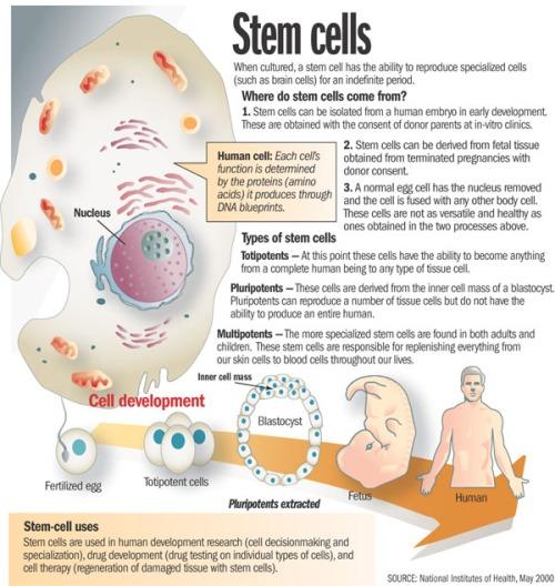 Stem Cells via NIH